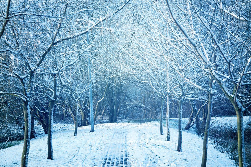 Rituales de invierno