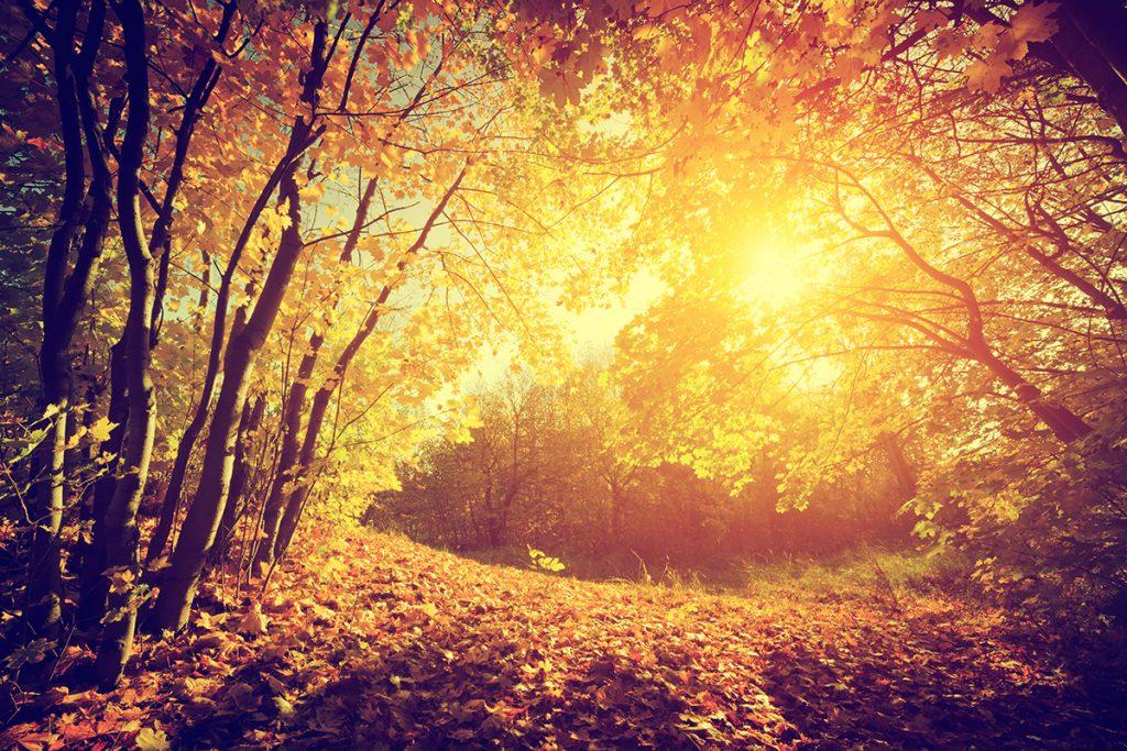 rituales de otoño