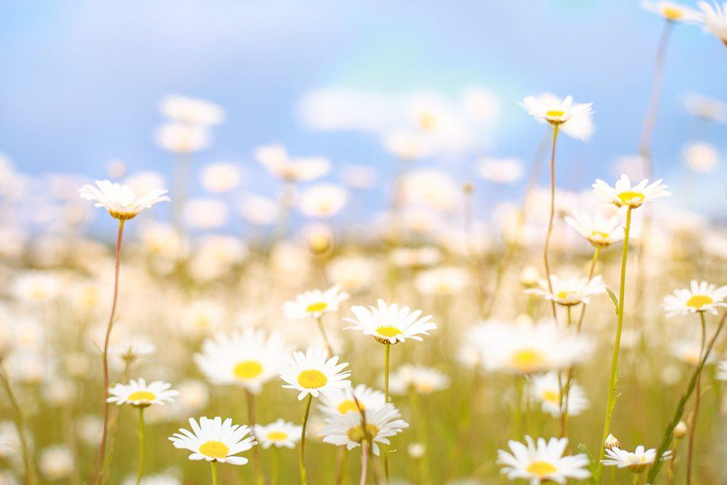 Rituales de primavera